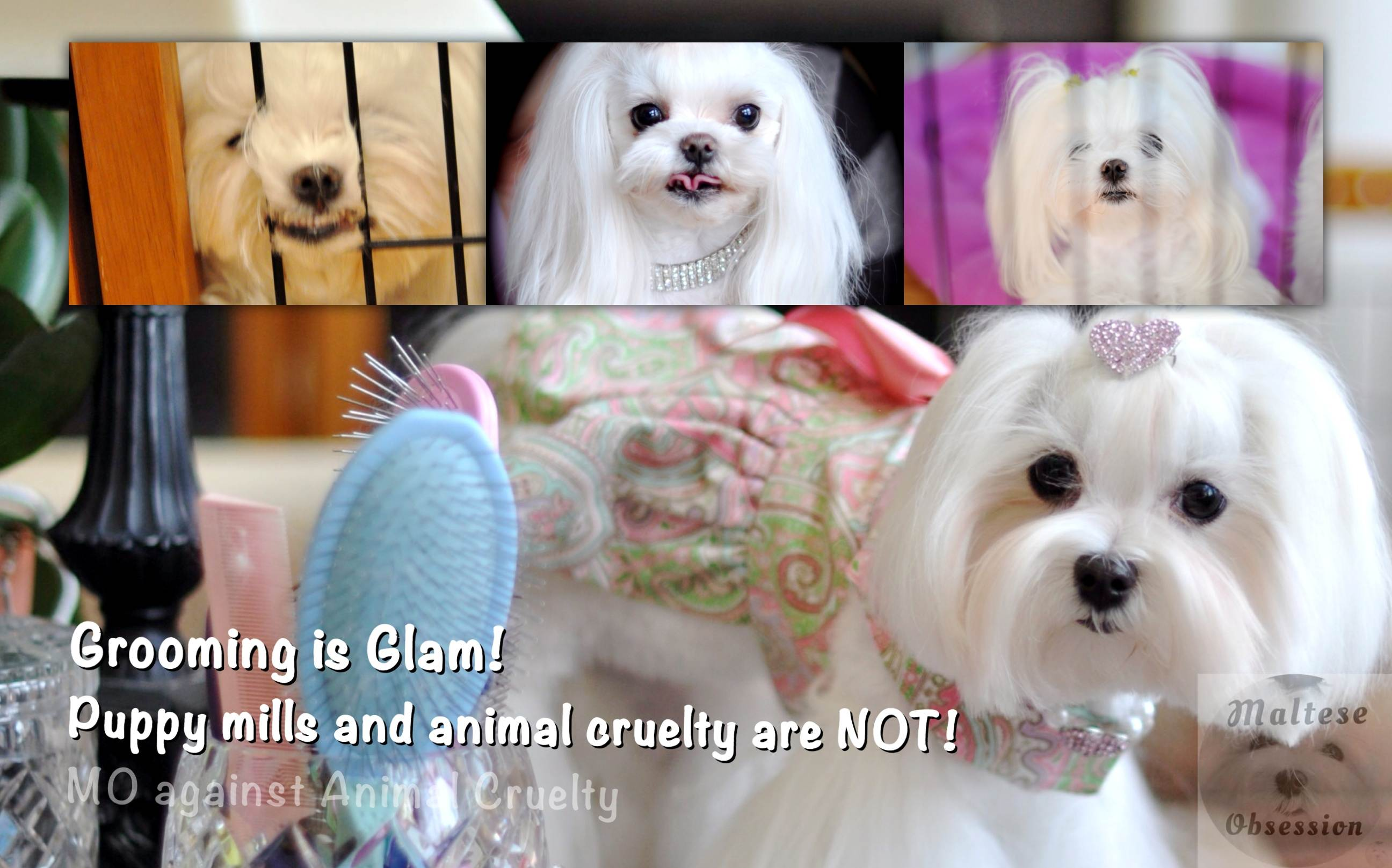 Grooming is GLAM Annimal Abuse is NOT