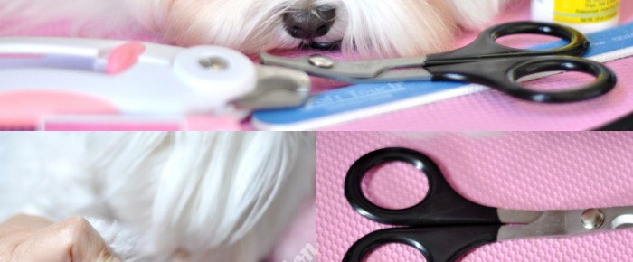 Dolce's Paw Spaw:   How to Cut Nails on Pet Maltese = Nail Trimming Tutorial