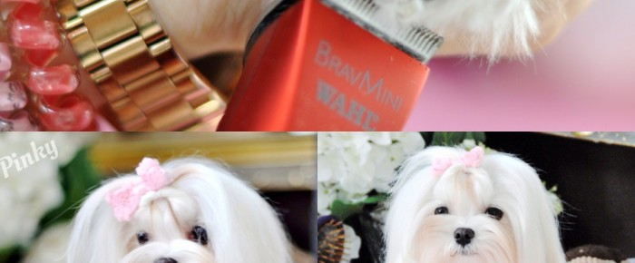 Paw Spaw Part 1 – How to Clip the Paw Hairs using Bravura and BravMini