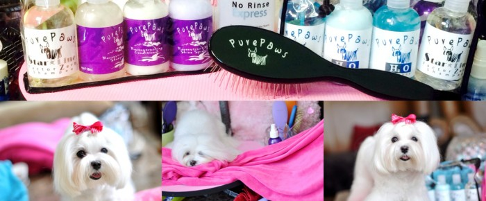 Dolce Daily Brush Out + July NEW Go To Grooming GOODIES!
