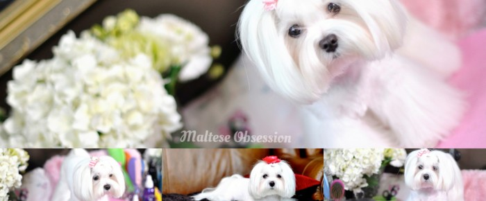 Dolce Polar Bear Face and Summer Short Trim with Palazzo Legs Video Tutorial