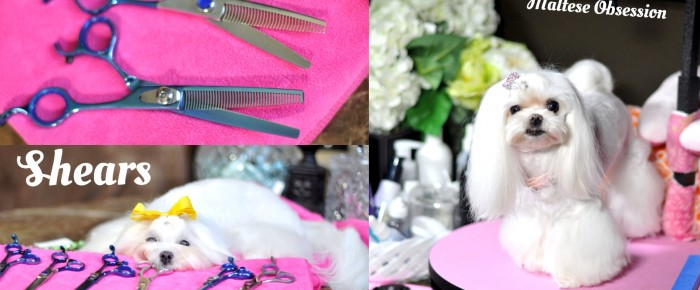 Geib Buttercut Kiss SHOW Special Shears ~ Blenders and Chunkers