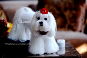Dolce's Winter White