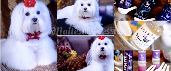 Winter WHITE ~ How we turned Dolce's fur into WINTER WHITE FUR!