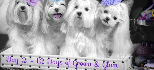 Day 2 – Groom & Glam Giveaway