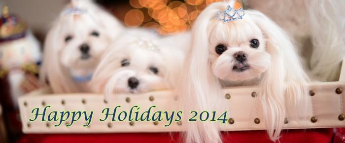 Happy Holidays & Merry Christmas ~~ Team MO