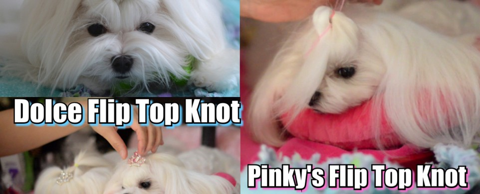 Dolce Flip – Maltese Dolce's Top Knot Flipped Tutorial by Pinky & Dolce