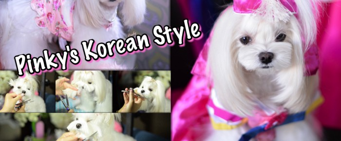 GROOMING: Pinky Maltese Korean Style Face ~ Asian Style Dog Groom