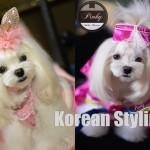 Pinky2_KoreanYoutubeyoutube copy