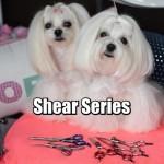 Maltese Dog Grooming SHEAR SERIES