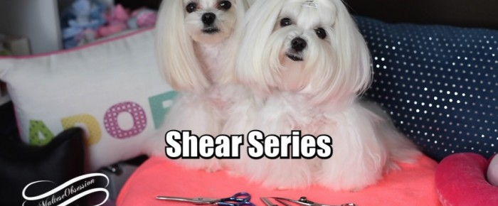 SHEAR SERIES ~ Maltese Dog Grooming Shears Series