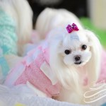 Pinky & SOFTY TuTu Jacket