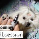 Nail Obsession: Filing Maltese Dog Nails