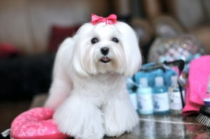 Dolce July Grooming Goodies