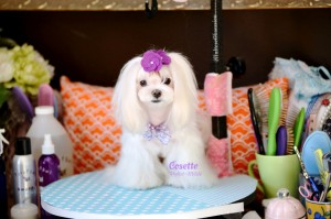 Cosette ~ Cheerful & Caring