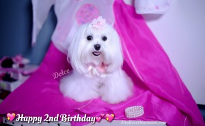 Dolce's 2nd Birthday Pictures