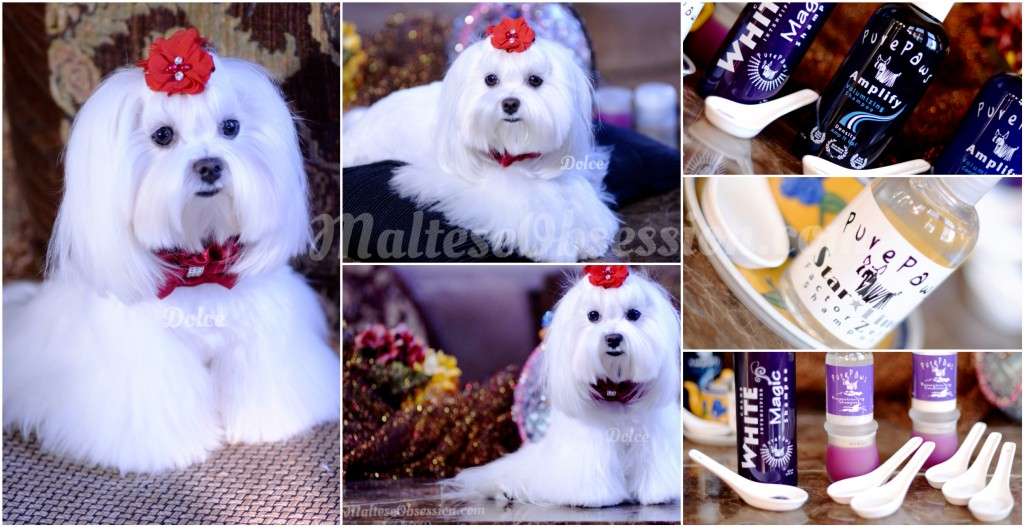 Dolce in Winter White ^_^
