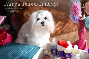 Happy ThanksGIVING from Dolce & Tweety and Team MO
