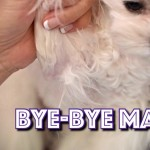 mats7MATSYoutube